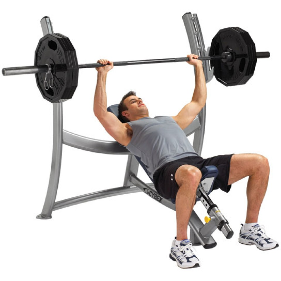 Cybex Olimpic Incline Bench Gym Source